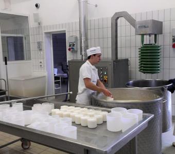 Падуя - Молочные продукты